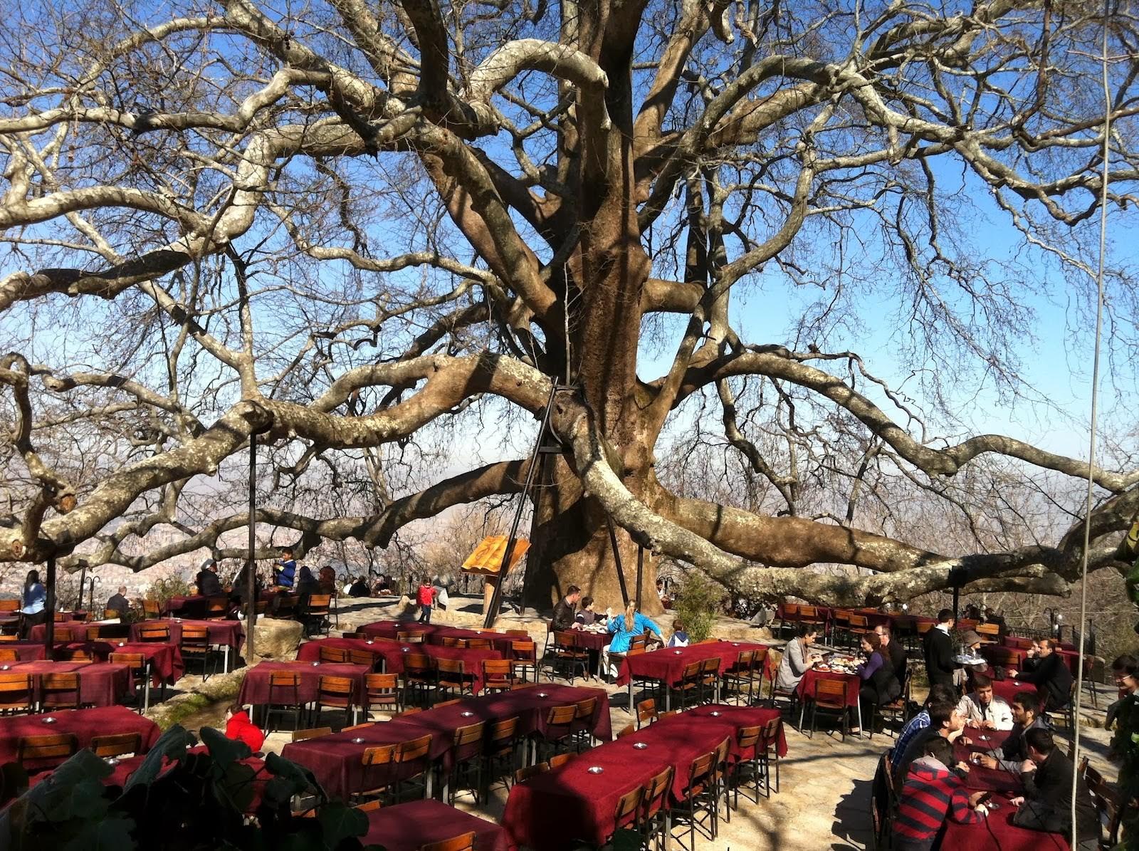 Top Tourist Programmes in Bursa