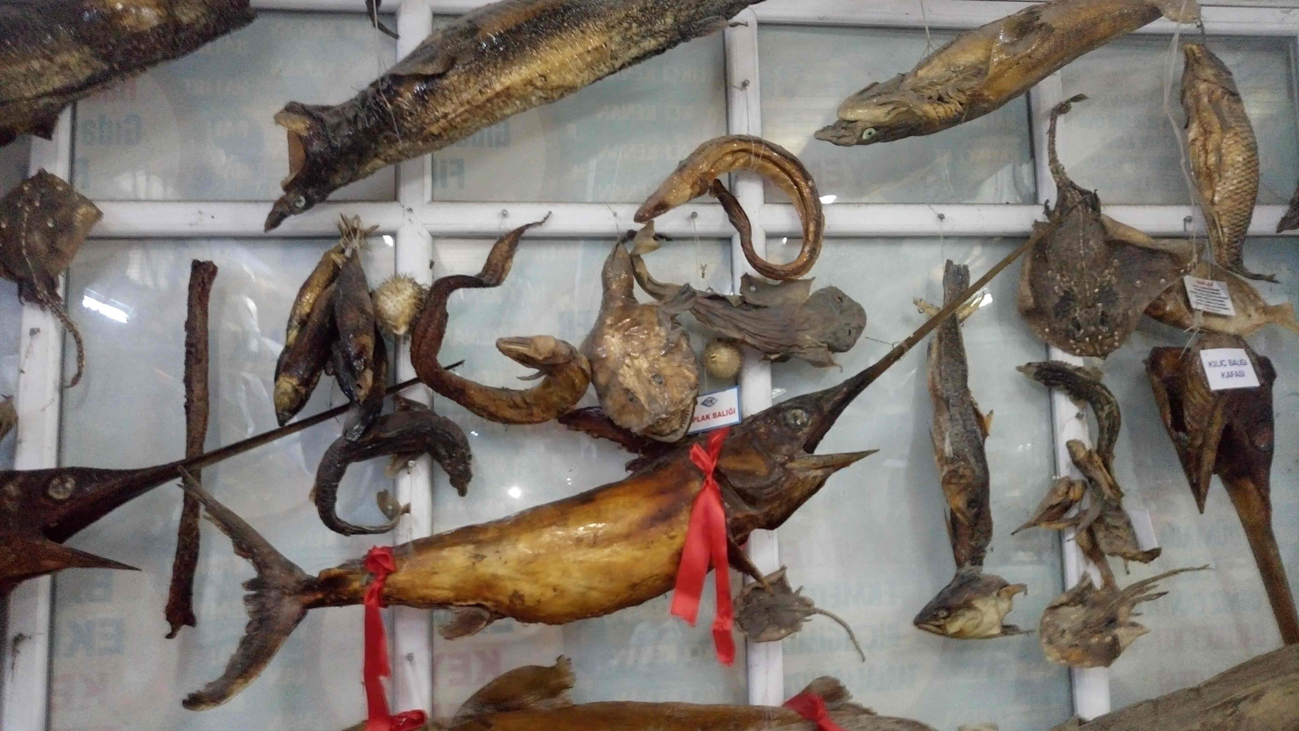 متحف تركيا للأحياء البحرية