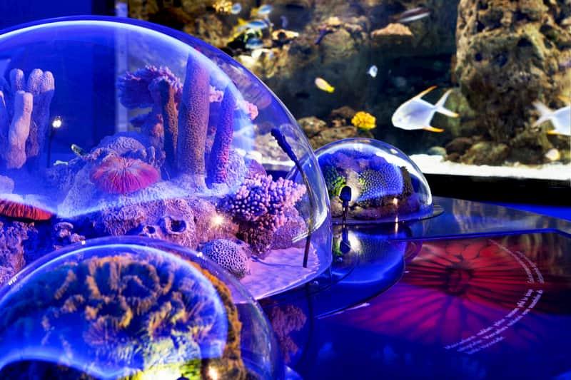 اكواريوم  اسطنبول Aquarium