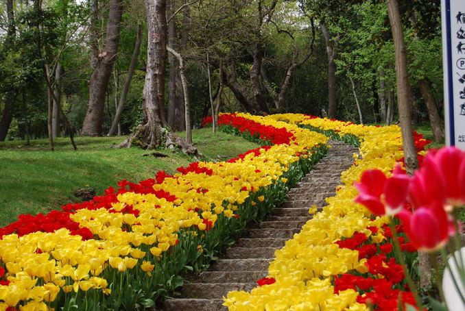 حديقة يلدز في اسطنبول