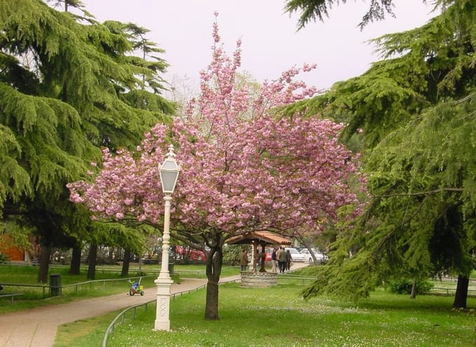 Fenerbahçe Park