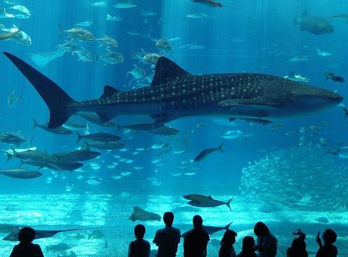 Water Park in Bakirkoy (Istanbul Aquarium)