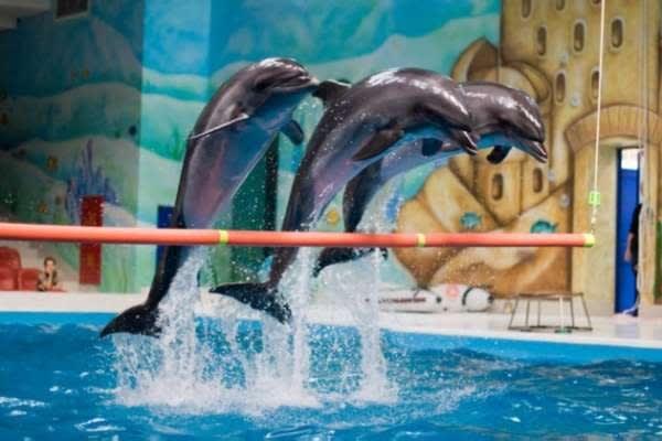 Dolphinarium Istanbul Timetable