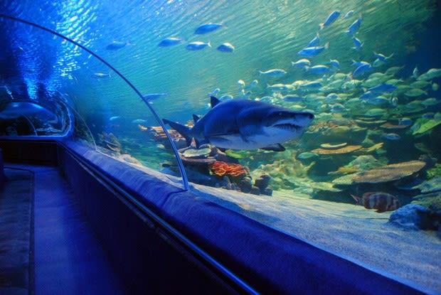 Turkuazoo Istanbul Aquarium