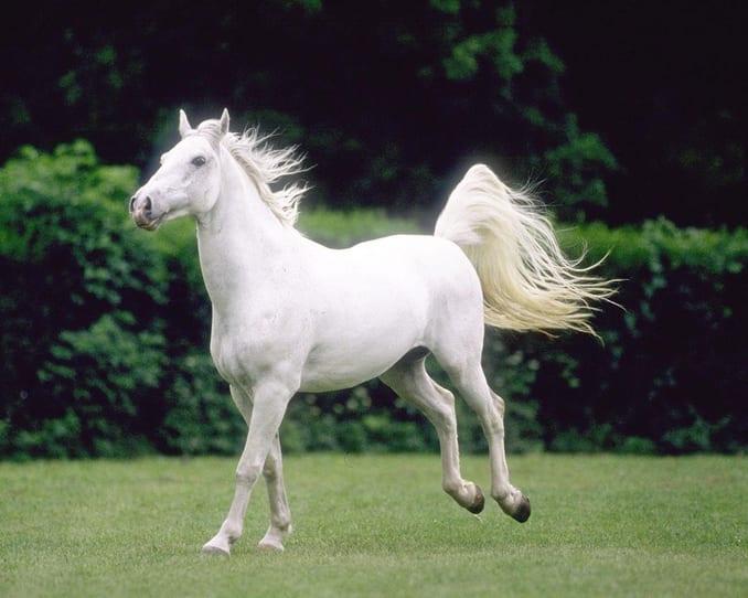 Equestrian Club Istanbul