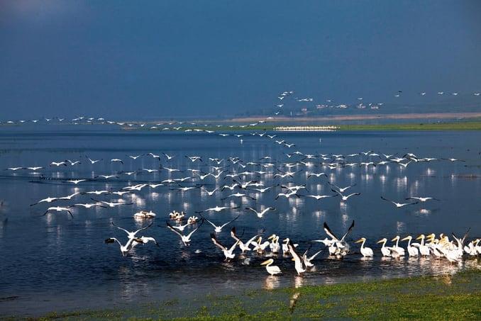 حديقة جنة الطيور الوطنية في بالك اسير