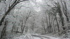 Belgrad Forest in winter
