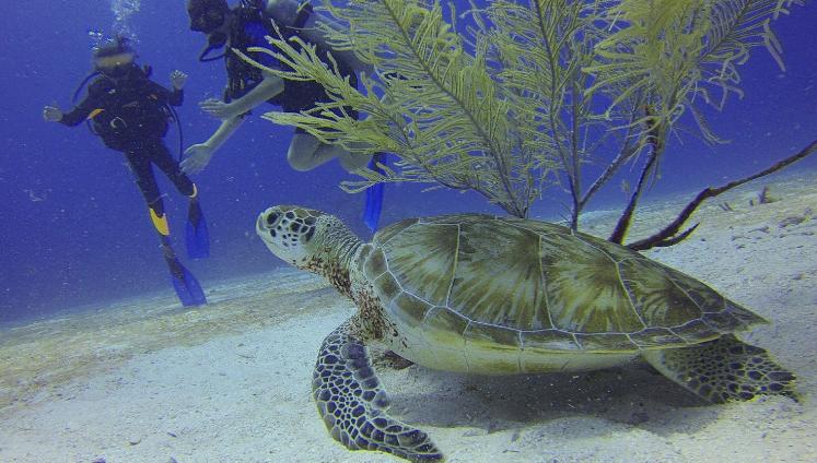 المشي تحت الماء في جزر المالديف