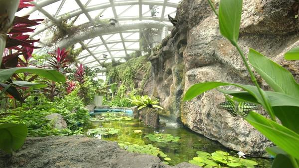 حديقة الفراشات في قونيا
