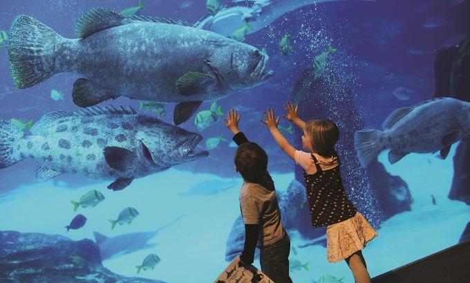 ViaSea Aquarium: Water Park in Istanbul