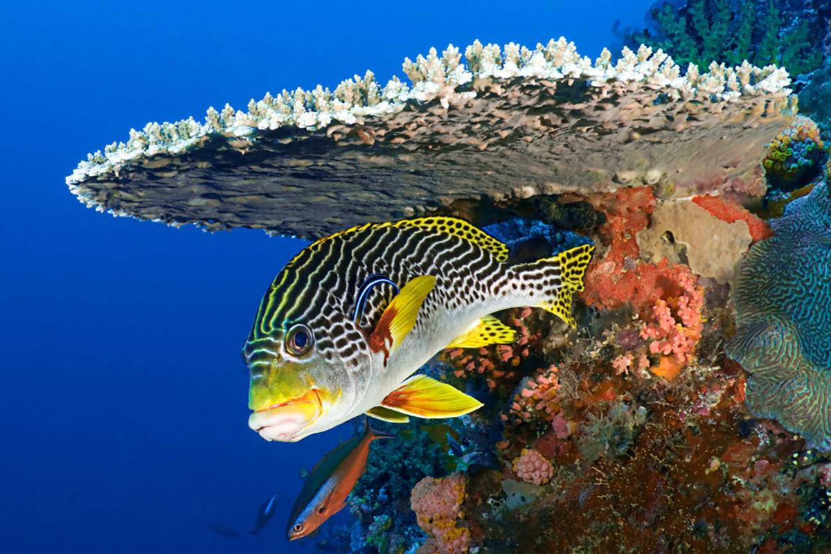 Watching Marine Animals in Maldives