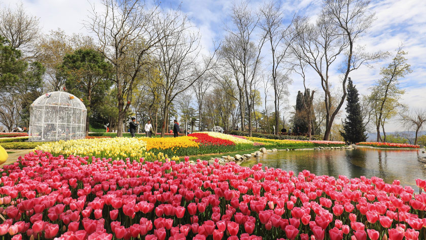 Istanbul Spring